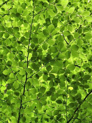 Czy drzewa umieją przystosować się do zmian klimatu? – praca naukowca z UAM w Current Biology