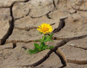 Wspólne działania przeciwko suszy