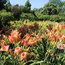 Liliowce w Botaniku