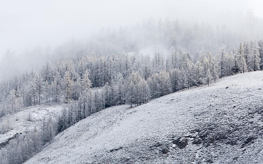 zdjęcie - krajobraz zimowy