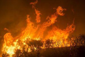 Dr Piotr Kołaczek. Jak pożary zmieniały polskie lasy?