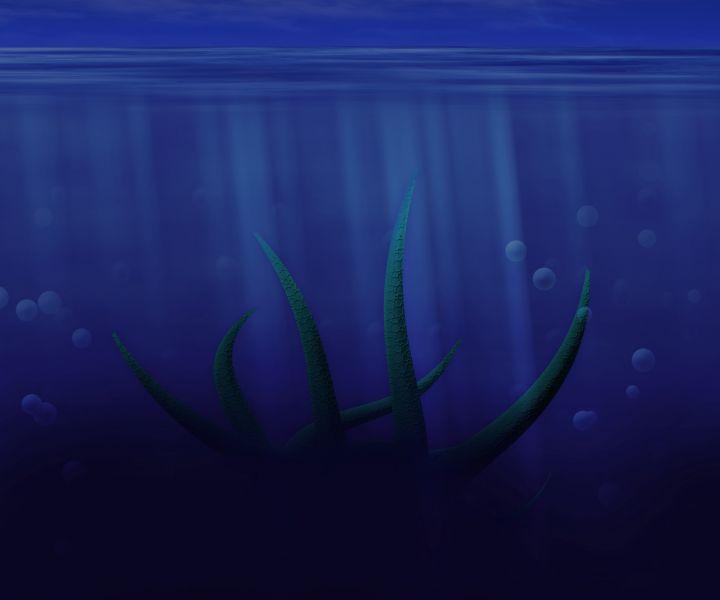 ośmiornica
