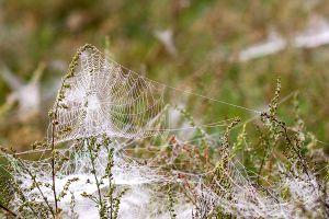 Babie lato, czyli podróże pająków