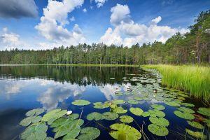 Ekologiczne kursy dla wszystkich od UAM