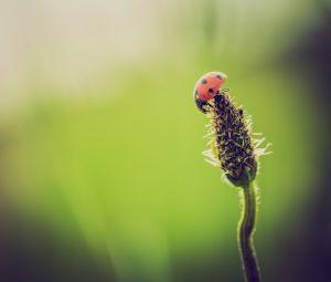 Bez owadów nie ma życia na Ziemi