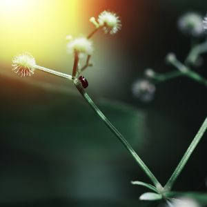 Webinarium Bio-Logiczne - Alergia pyłkowa w pigułce