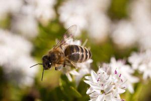 Wielki Dzień Pszczół w Ogrodzie Botanicznym