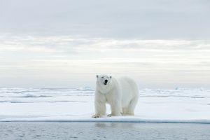 Wygraj podróż życia do Arktyki