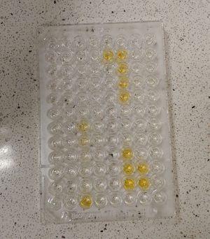 Pierwsze pilotażowe testy immunologiczne w CZT UAM