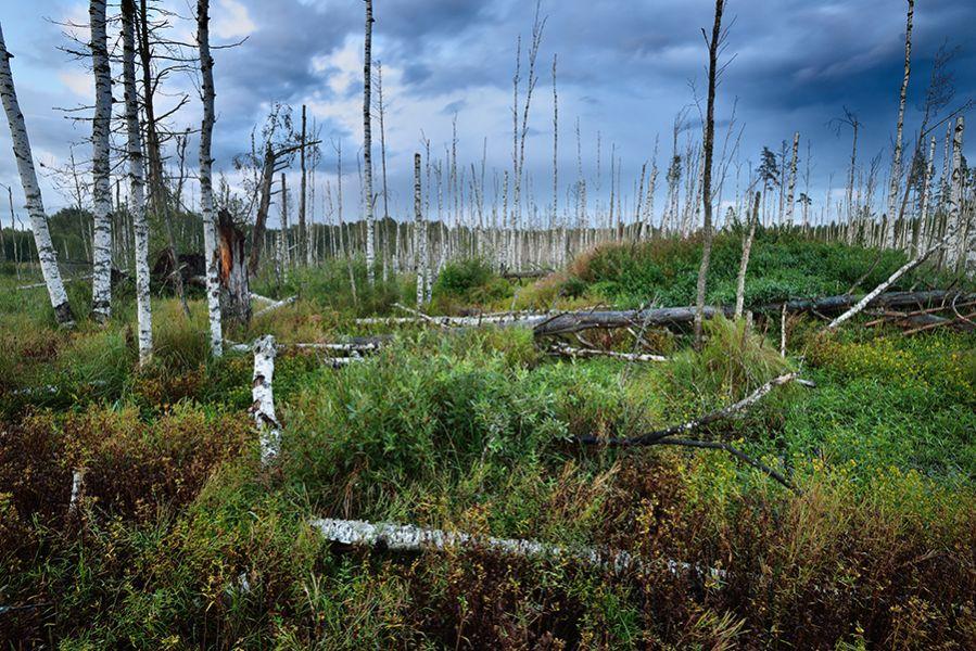 torfowisko - fotografia