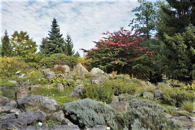 Alpinarium w Ogrodzie Botanicznym UAM
