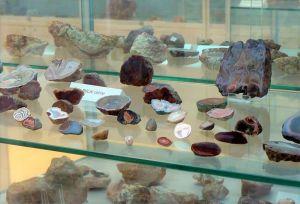 Kolekcja Muzeum Ziemi UAM w wirtualnej odsłonie