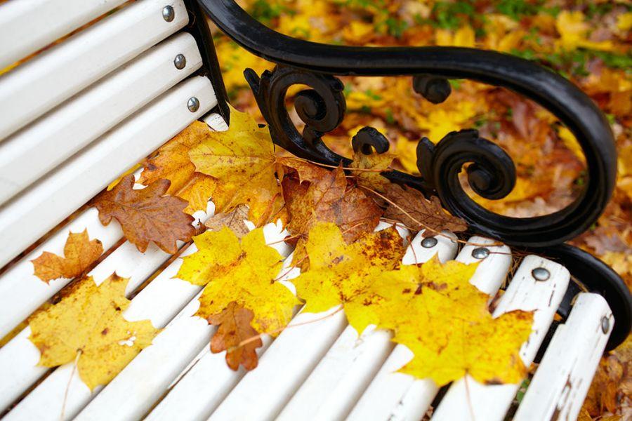 ławeczka jesień