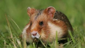 UAM ratuje zagrożone gatunki